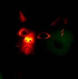 luminescentcat.jpg